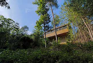 Pigeon Forge One Bedroom Cabin in a Wooded Setting